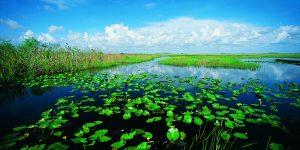 glades bassin